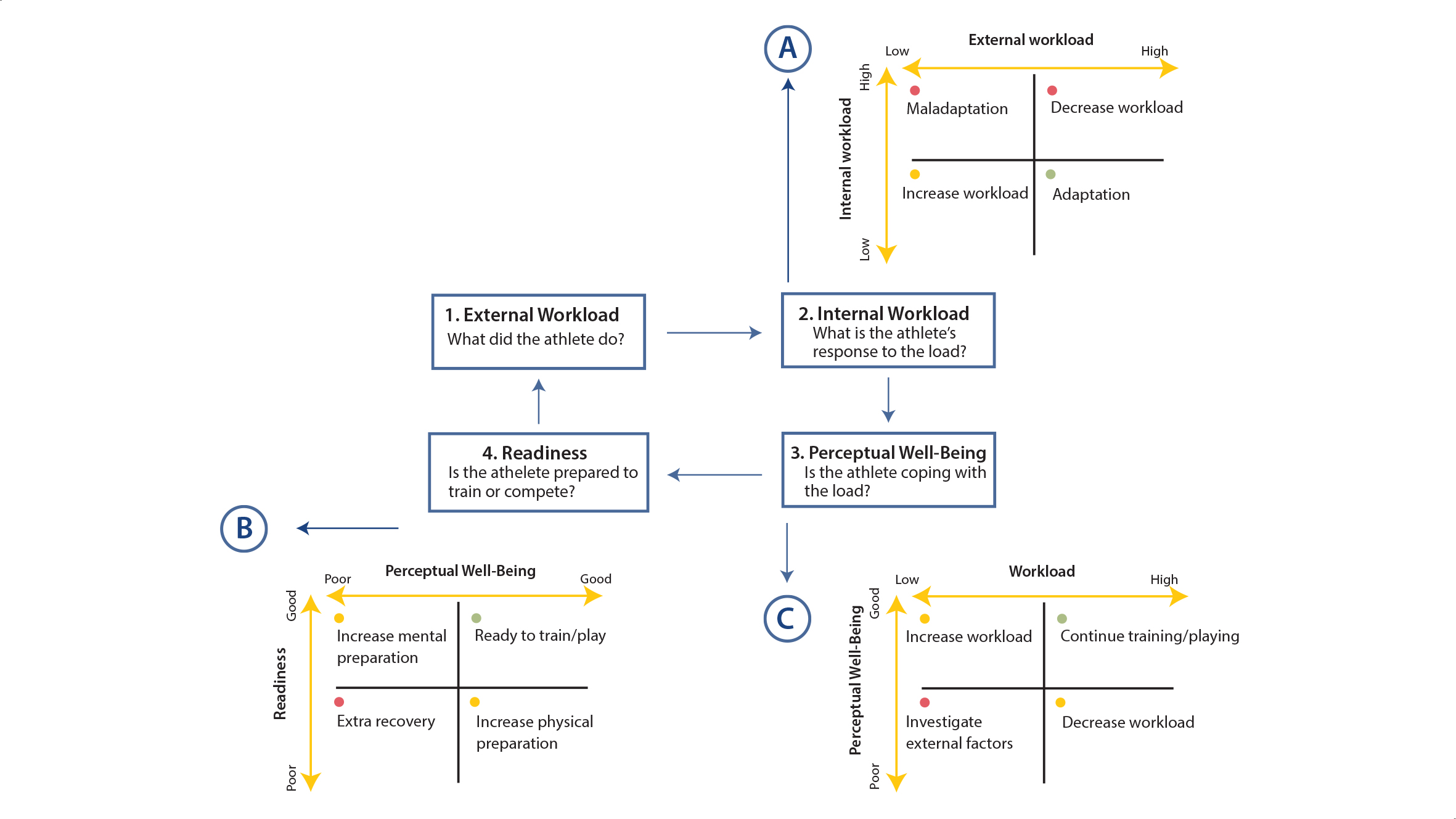 Figure 3. The athlete monitoring cycle. Model proposed by Gabbett et al. (2017).