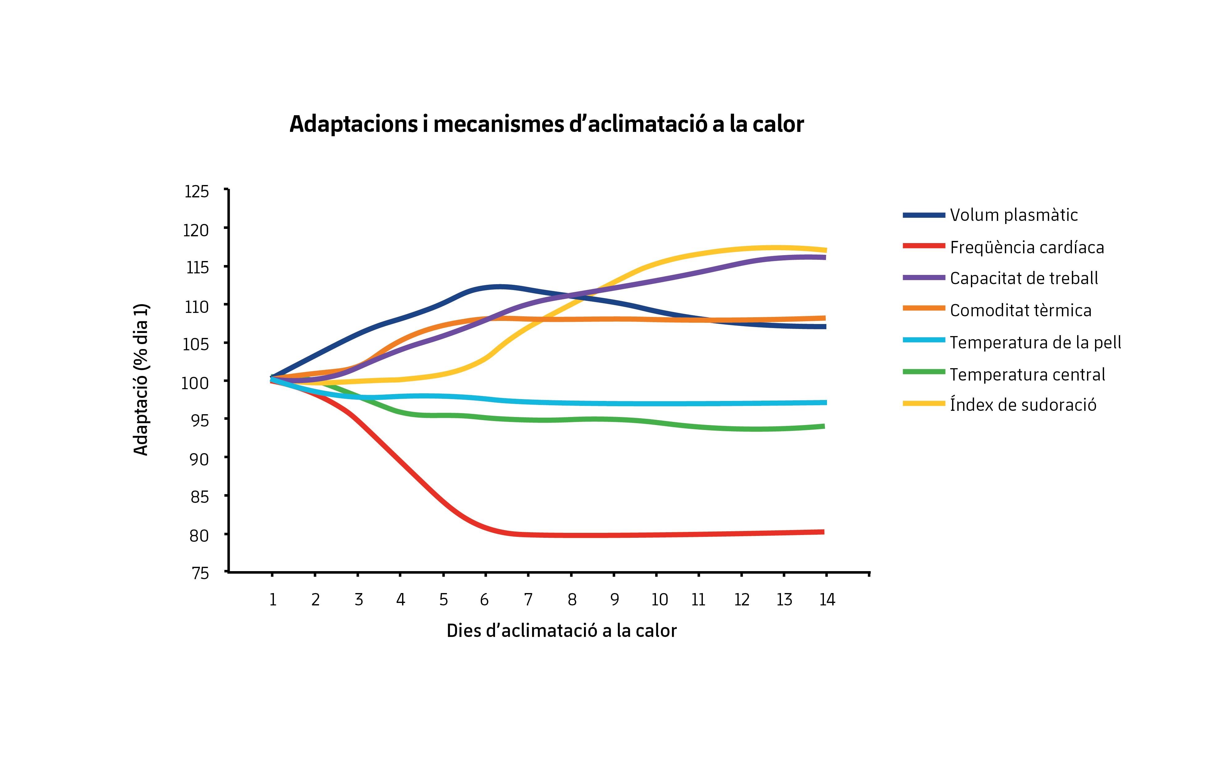 Figura 1. Adaptacions després d'un període d'aclimatació a la calor. Modificat de Périard et al. (2015).