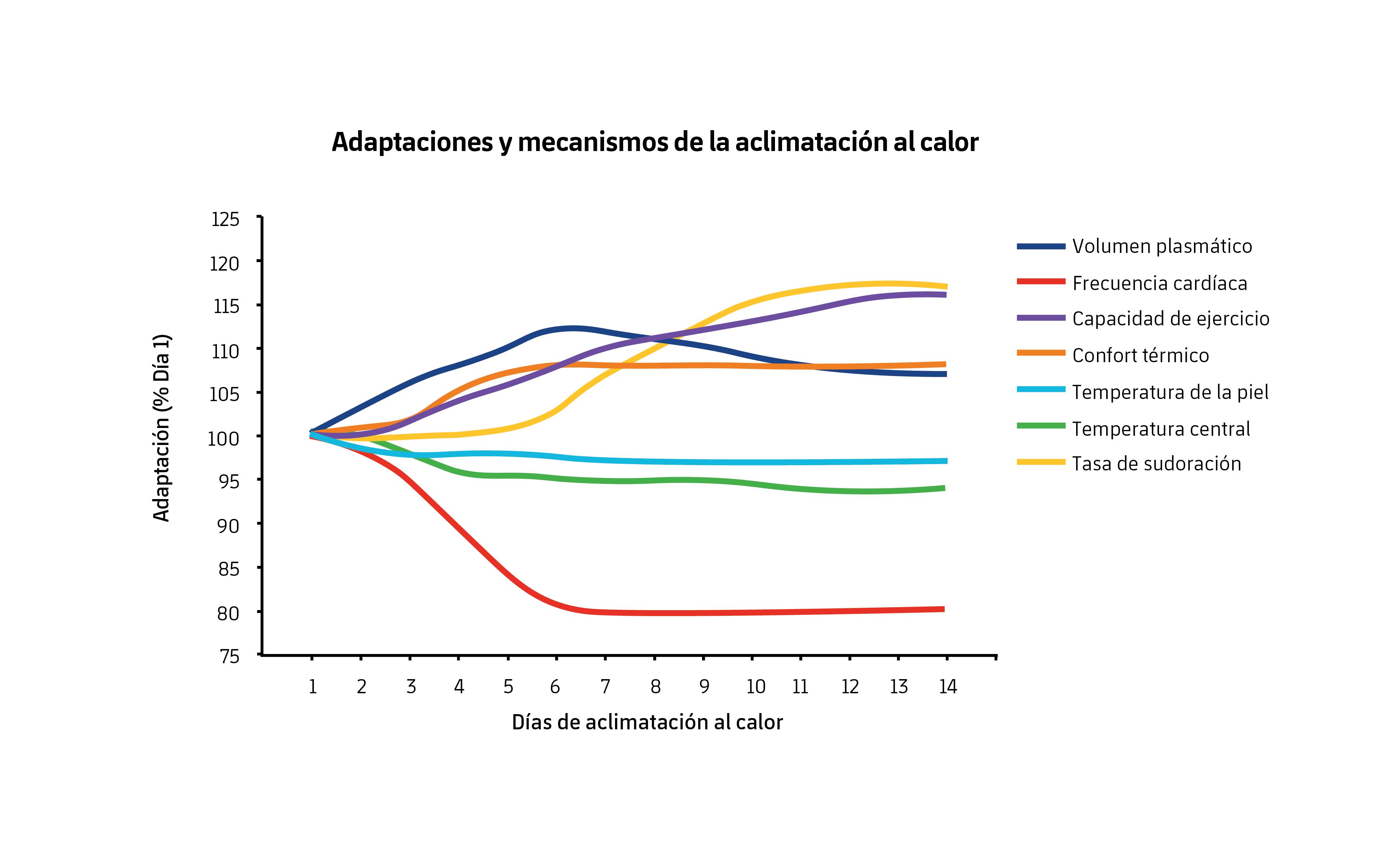 Figura 1. Adaptaciones tras un periodo de aclimatación en calor. Modificado de Périard et al. (2015).