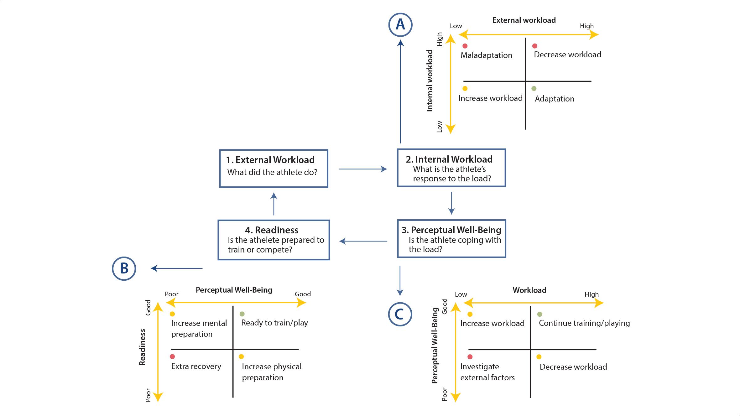 Figura 3. Cicle de seguiment de l'esportista. Model proposat per Gabbett et al. (2017).