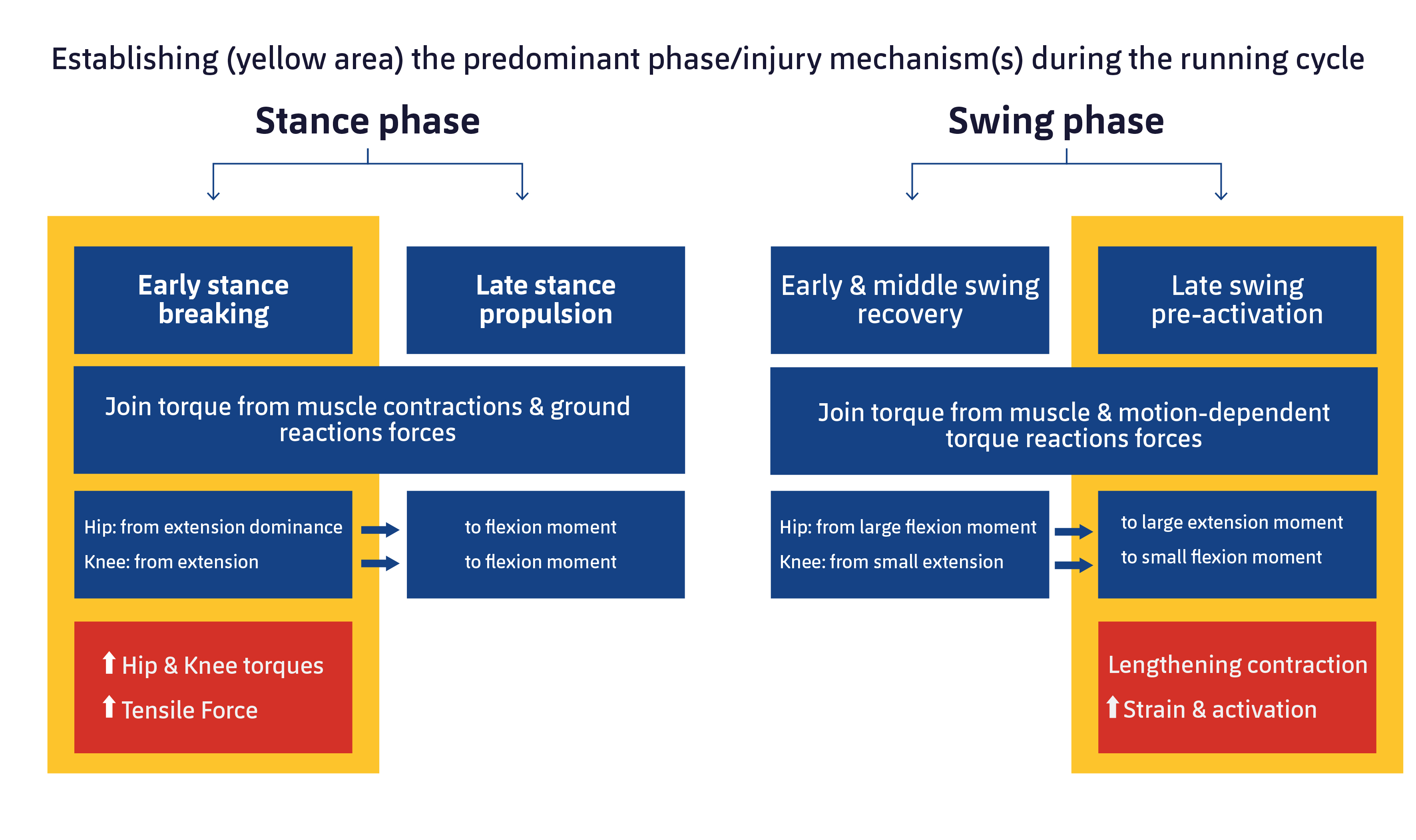 Figure 2. Characteristics of mechanics and muscle activation in the main phases in which hamstring injury occurs. Adapted from Huygaerts S, et al. 2020.