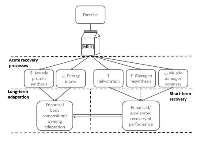 Figura 1. Beneficis de la ingesta de llet en diferents processos de la recuperació muscular. Figura obtinguda de James et al.1