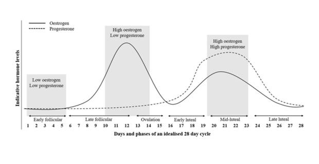 Figura 1. Esquema simplificado de las fases del ciclo menstrual y los niveles de estrógenos y progesterona en cada una de ellas. Figura obtenida de Lee et al.2