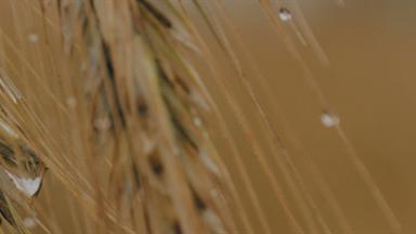 DIPLOMATURA DE AGROALIMENTOS